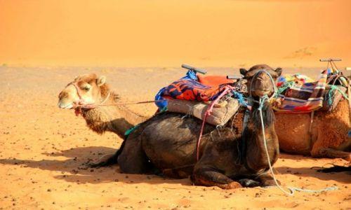 MAROKO / południowo-wschodni kraniec Tafilant / okolice Erfoud / Camele i Sahara #4