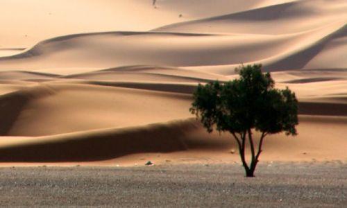 Zdjecie MAROKO / Erg Chebbi / Merzouga / Samotne drzewo
