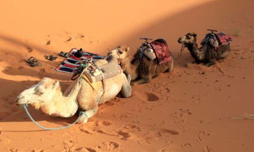 MAROKO / południowo-wschodni kraniec Tafilant / okolice Erfoud / Czekamy na zachód słońca nad Saharą, godz. 19:00