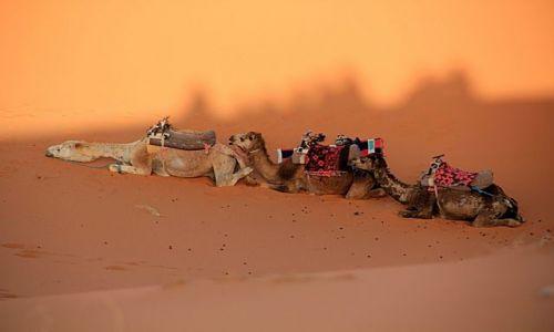 Zdjecie MAROKO / południowo-wschodni kraniec Tafilant / okolice Erfoud / Sahara - odpoczynek w cieniu wydm.