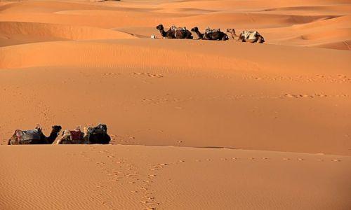 Zdjecie MAROKO / południowo-wschodni kraniec Tafilant / okolice Erfoud / Sahara #9, godz. 19:07