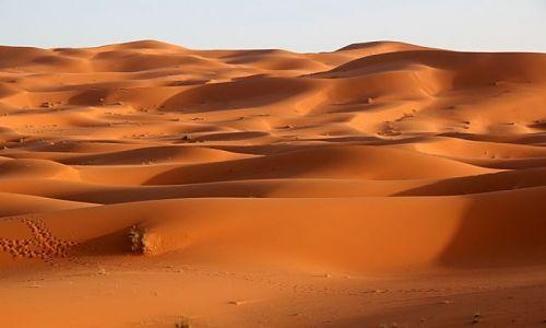 Zdjecie MAROKO / południowo-wschodni kraniec Tafilant / okolice Erfoud / Sahara #16