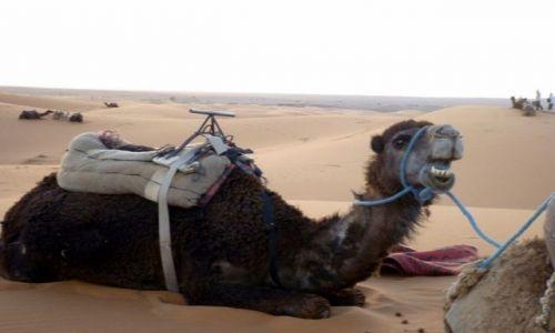 Zdjecie MAROKO / południowo-wschodni kraniec Tafilant / okolice Erfoud - Sahara / Trochę wyleniały ale zadowolony.