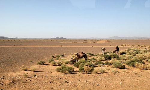 Zdjecie MAROKO / - / w drodze do Tineghir / Kamienista pustynia