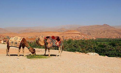 Zdjecie MAROKO / - / TINERHIR / Panorama miasta z camelami.
