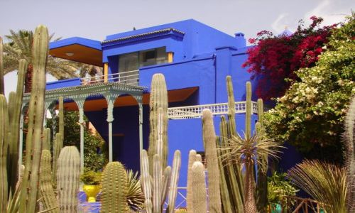 Zdjęcie MAROKO / brak / Marrakech / Jardin Majorelle