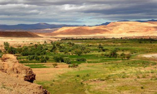 Zdjecie MAROKO / Południe gór Atlas / Okolice Ait Bin Haddou / Oaza