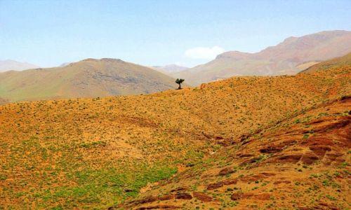 Zdjecie MAROKO / Południe Maroka / Góry Atlas / Samotna w Górach Atlas