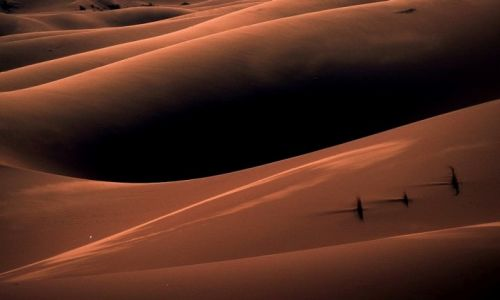 Zdjecie MAROKO / Sahara / ERG Chebbi / Maroko 91