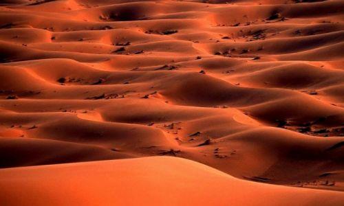 Zdjecie MAROKO / Południe / Merzouga / Maroko 27