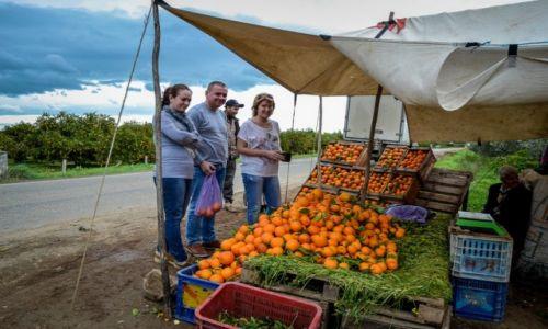MAROKO / Maroko / Maroko / pomarańcza prosto z sadu