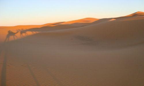 Zdjęcie MAROKO / - / Merzouga desert / Cienie na wydmach