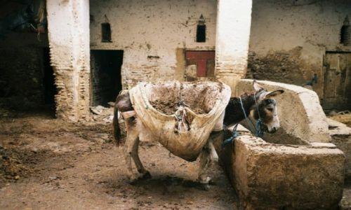 Zdjecie MAROKO / Fez / medina / przystań beduinów