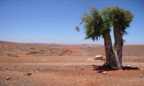 Zdjecie MAROKO / maroko / maroko / ostatni mohikan