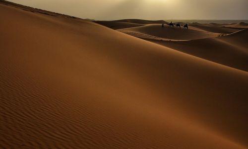 Zdjecie MAROKO / Południe / Erg Chebbi / Piękno pustyni