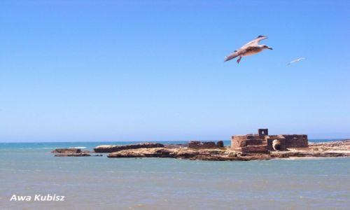 MAROKO / Południe / Essaouira / Essaouira - Wyspy Purpurowe