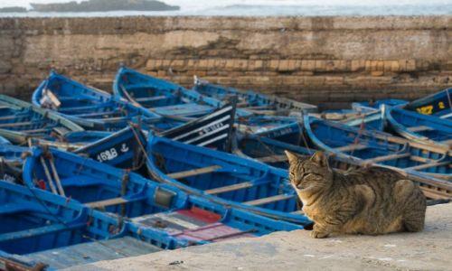 Zdjęcie MAROKO / wybrzeże / As-Sawira / Mieszkaniec As-Sawiry