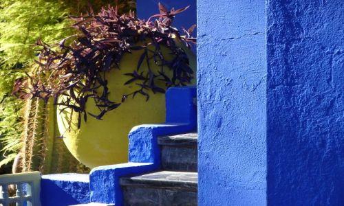 Zdjecie MAROKO / brak / Marrakech - Jardin Majorelle  / Kompozycja