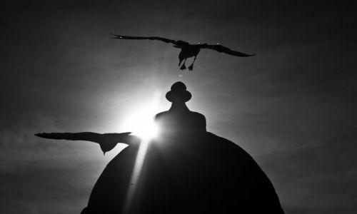 Zdjęcie MAROKO / Wybrzeże / As Sawira / Lądowanie