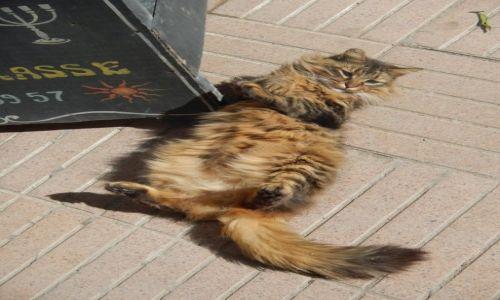 Zdjecie MAROKO / - / Essaouira / Marokański kudłacz :)