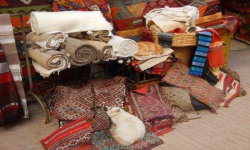 Zdjecie MAROKO / - / Essaouira / Ile kotów widzisz na zdjęciu?
