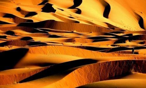 Zdjecie MAROKO / Sahara / Erg Chebbi / Sahara 111