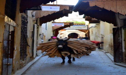 Zdjęcie MAROKO / Fez-Bulman / Fez / Tragarz