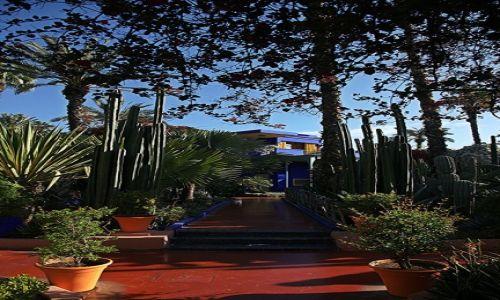 Zdjecie MAROKO / Marrakesz / Ogród Majorelle / Blue Majorelle