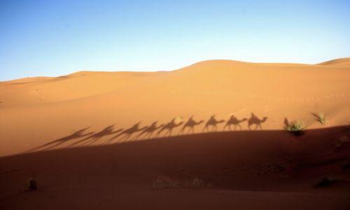 Zdjecie MAROKO / Sahara / pustynia Merzouga / Szła przez pustynię, szła karawana