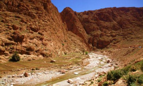 Zdjęcie MAROKO / Ouarzazate / Wąwóz Todry / Ogrôdki