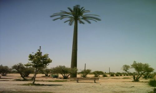 MAROKO / brak / Marrakech / Sztuczna palma-przekaźnik telefoni komórkowej