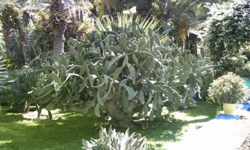 MAROKO / brak / Marrakech / Jardin Majorelle