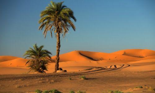 Zdjęcie MAROKO / Sahara / Erg Chebi / na skraju Sahary