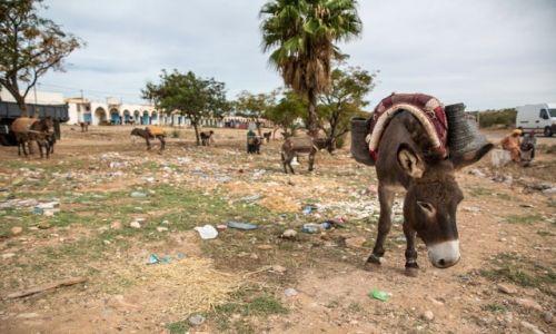 Zdjęcie MAROKO / Wybrzeże atlantyckie / Smimou / Zaparkuj swojego osła