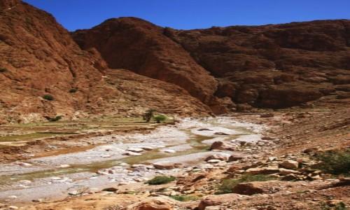 Zdjecie MAROKO / Ouarzazate / Teneghir  / Wąwóz rzeki Todra