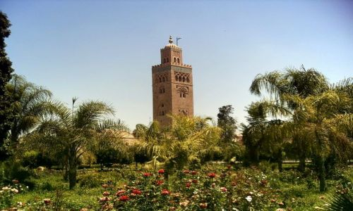 Zdjęcie MAROKO / brak / Marrakech / Koutubija