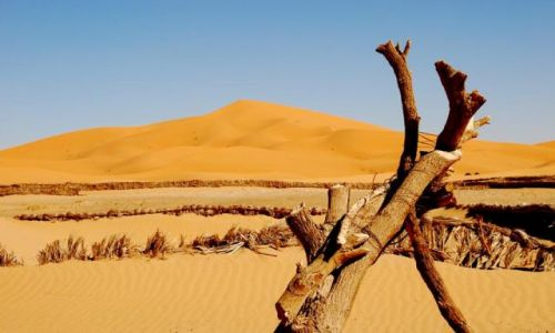 Zdjecie MAROKO / Sahara / Merzouga / Tu� tu� przed S