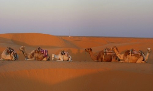 Zdjęcie MAROKO / Sahara / - / Karawana (nie) idzie dalej