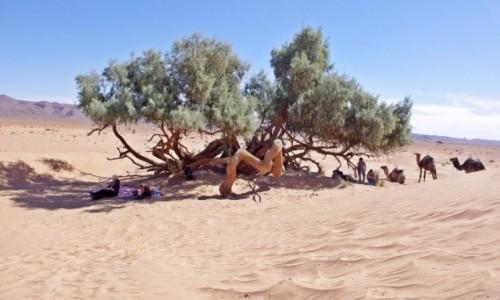 Zdjecie MAROKO / Sahara / W pobli�u Tagounite.29.903238,-5.679926 / Piknik pod tama