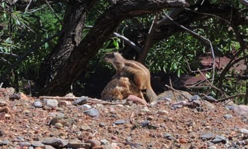 Zdjecie MAROKO / Agadir / przy drodze do jaskini Grotte Win Timdouin / Afrowiewi�rka