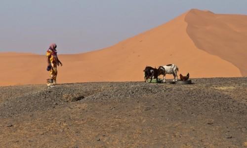 Zdjęcie MAROKO / Erg Chebbi / / / Gospodarstwo na pustyni