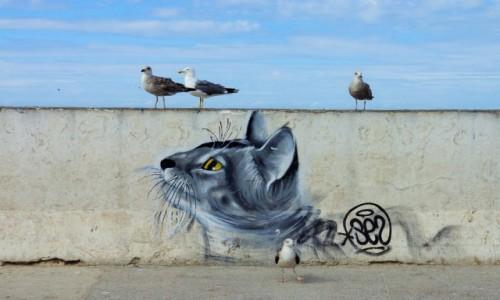 Zdjecie MAROKO / Meknes-Tafilalt / Essaouira / polowanie