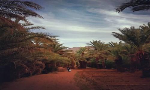 Zdjecie MAROKO / - / Maroko / Maroko