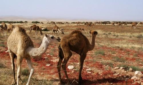 Zdjecie MAROKO / - / - / Maroko