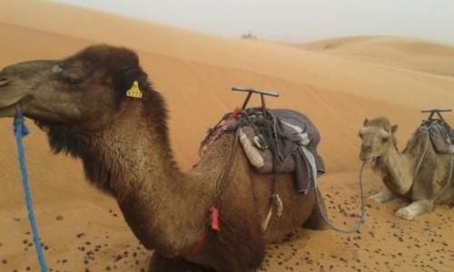 Zdjecie MAROKO / Maroko / Maroko / pustynia
