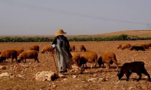 Zdjęcie MAROKO /  Dukkala-Abda / El Jadida / Tajemniczy pasterz