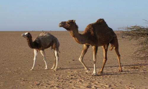 Zdjecie MAROKO / Sahara Zachodnia / Sahara / Na pustyni
