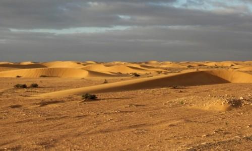 Zdjęcie MAROKO / Sahara Zachodnia / Sahara / Po piaskach Sahary
