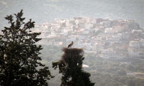 Zdjęcie MAROKO / Fez / okolice Fezu / bocian