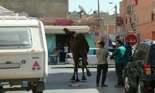 MAROKO / Sahara Zachodnia /  Al-Ujun / W drodze do rzeźni